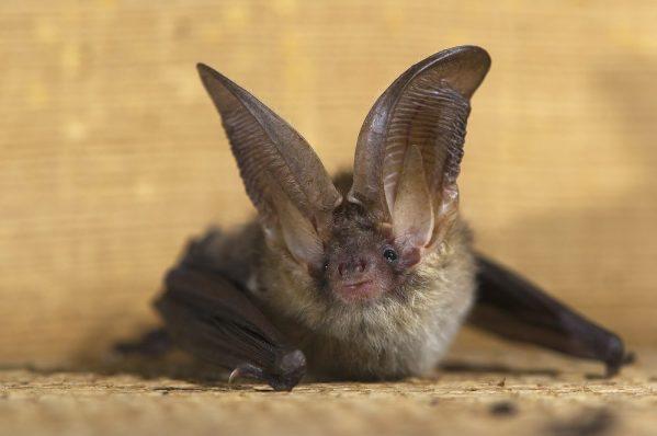 Bats Affected By Leds